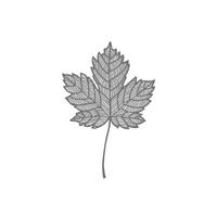 Magnifient Maple